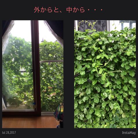 IMG_9870.JPG